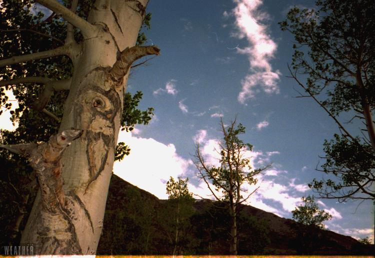 Bison Skull Tree.